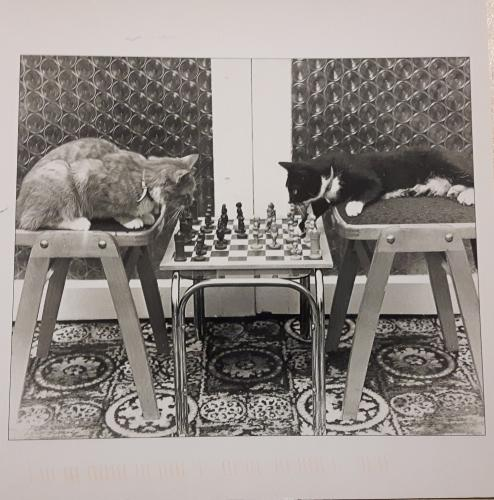 US-3967529-CatsChessBWPhoto-Germany041616